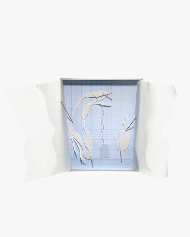 Untitled (boxed specimen 6), mount board, acid-free tissue, graph paper, cotton-rag paper, stainless steel dressmaking pins, silk thread, tracing paper tag, 9.3cm x 8.3cm (17cm including 'curtains') x 1.5cm, 2012