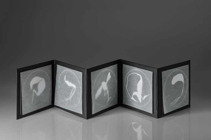 Untitled (unknown specimens photogram book 1), photograms on resin-coated paper with glassine, box board, mount board, 19.7cm x up to 98.5cm x .3 open, 19.7cm x 19.7cm x 3cm closed, 2015