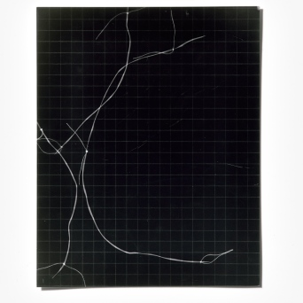 Untitled (written with light), panel 1, photogram on resin-coated paper, 25.4cm x 20.3cm, 2014