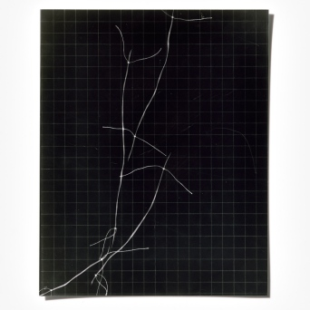 Untitled (written with light), panel 8, photogram on resin-coated paper, 25.4cm x 20.3cm, 2014