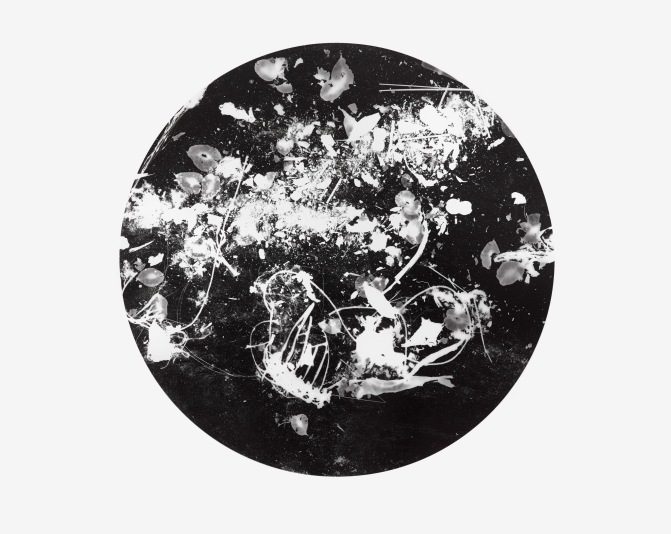 Unnatural Collection 2, photogram on resin coated photographic paper, 40.6cm x 50.8cm, 2016